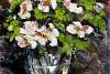Bukiet białych anemonów
