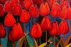 Tulipanowa opowieść